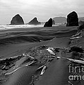 Oregon Coast Black And White by Mike Nellums
