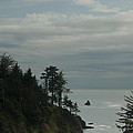 Oregon Coast Trees 1 by Eva Jo Wu