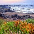 Oregon Coast Wildflowers by Dominic Piperata