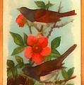 Oregon Snow Bird Trading Card by Anne Kitzman