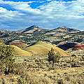 Oregons Painted Hills by Athena Mckinzie