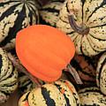 Organic Pumpkins by Wendy Connett