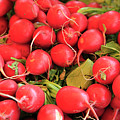 Organic Radishes by Wendy Connett