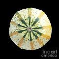 Ornamental Melon by Heiko Koehrer-Wagner