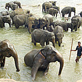 Orphaned Elephants by Paul Cowan