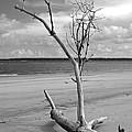 Ossabaw Island 2 by Susan Cliett