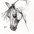 Ostragon Polish Arabian Horse 1 by Angel Ciesniarska
