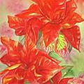 Other Poinsettia by Inese Poga