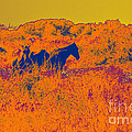 Outer Banks Horses by Paulette B Wright