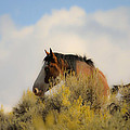 Over The Hill Pinto by Steve McKinzie
