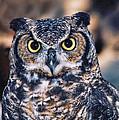 Owl 2 by Helaine Cummins