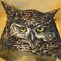 Owl Watercolor by Alfred Ng