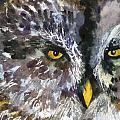 Owl Eyes by Miriam  Schulman