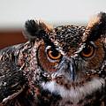 Owl by LeeAnn McLaneGoetz McLaneGoetzStudioLLCcom