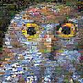 Owl Mosaic by Paul Van Scott