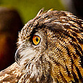 Owl Profile by Bedford Shore Photography