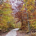 Pachaug State Forest by Michelle Welles