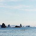 Pacific Northwest by C Sitton