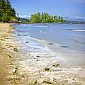 Pacific Ocean Coast On Vancouver Island by Elena Elisseeva
