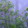 Pacific Rhododendron Flowering In Misty by Tim Fitzharris