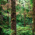 Pacific Rim National Park 14 by Terry Elniski