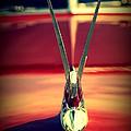 Packard Swan 3 by Susanne Van Hulst