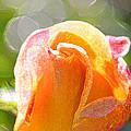 Paint Daub Yellow Rose by Marie Jamieson