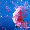 Paintball Hitting An Egg by Ted Kinsman