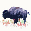 Painted Buffalo by Steve McKinzie