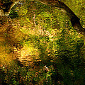 Painted Forest by Eyefool Photos Brett Klersfeld