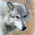 Painted Grey Wolf by Steve McKinzie
