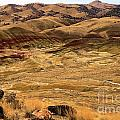 Painted Hills Landscape by Adam Jewell