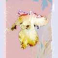 Painted Iris by Karen Lynch