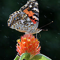 Painted Lady In A Shower by Doris Potter