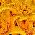 Painted Lily by Tap On Photo