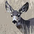 Painted Muley by Steve McKinzie