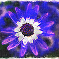 Painted Purple  by Debbie Portwood