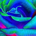 Painted Rose 2 by Will Borden