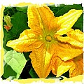 Painted Squash Blossoms by Will Borden