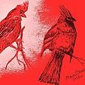 Pair Of Cardinals by Maria Urso