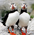 Pair Of Puffins by Betty Wiley