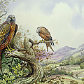 Pair Of Red Kites In An Oak Tree by Carl Donner