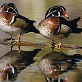 Pair Of Wild Birds by Natural Selection Bill Byrne