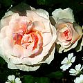 Pale Pink Roses In Garden by Susan Savad