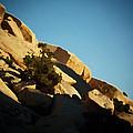 Palette Of The Contrasts That Are Rocks by Carolina Liechtenstein