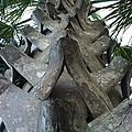 Palm Art by Dayton Preston