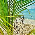 Palm Beach by Marie-france Quesnel