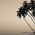 Palm Dreams by Natalia Rylova
