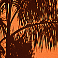 Palm Frond Abstract by Carolyn Marshall