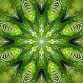 Palm Kaleidoscope 11 by Francesa Miller